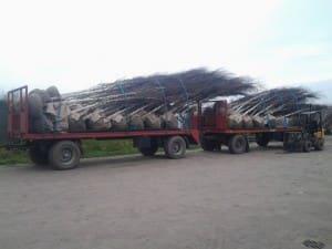 Transport bomen
